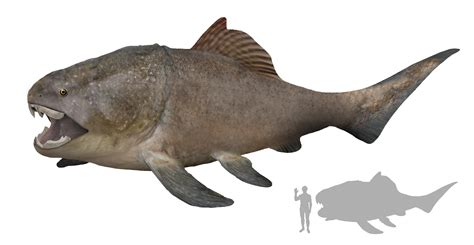 Dunkleosteus - Wikiwand